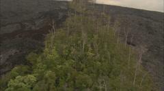 Trees burnt volcano Stock Footage