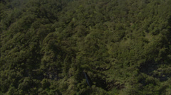Forrest trees canyon sky Stock Footage