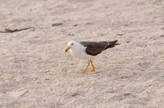 Wandering gull on a sea coast Stock Photos