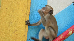 Monkey steals food from a tourist Stock Footage