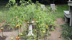 Backyard garden in New England, home farming Stock Footage