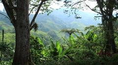 Tea plantation of Cameron Highlands (Malaysia) Stock Footage