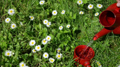 Water small clay cup standing on meadow between the daisies Stock Footage