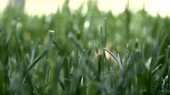 Fresh Spring Lawn - stock footage