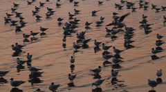 Seagulls at Bang Pu in Samut Prakan , Thailand Stock Footage