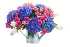 Boquet of white tulips, pink roses and blue hortensia flowers Stock Photos