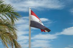 Egyptian flag on flagpole near palms - stock photo
