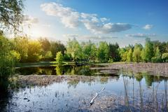 Duckweed on the river - stock photo