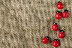 Ladybugs on gunny Stock Photos