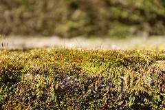 Moss on Wall - stock photo