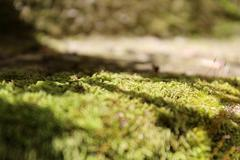 Moss on Wall Stock Photos