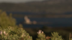 Island with lighthouse in Sardinia Stock Footage