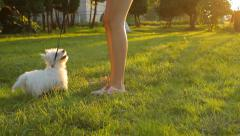 Girl training pedigree dog in the park in summer in  the evening Stock Footage