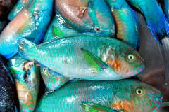 Colorful fish for sale in the public market. - stock photo