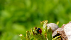 Beetle in the grass Stock Footage