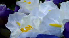 White orchids Stock Footage