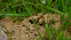 Ants on an ant hill Stock Footage