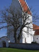 barren old tree in front of white church - stock photo