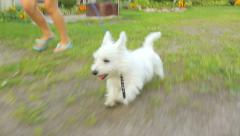 Girl and white young little dog running in the yard near the house, close-up Stock Footage