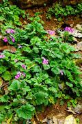nice purple flower plant - stock photo