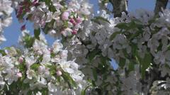 The Oregon Garden 2014 Spring Stock Footage