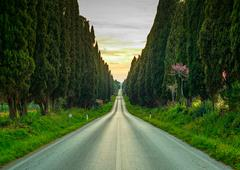 Bolgheri famous cypresses tree straight boulevard on sunset. maremma, tuscany Stock Photos