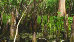 Florida River Swamp Stock Footage