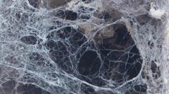 Spooky Creepy Cobwebs - stock footage