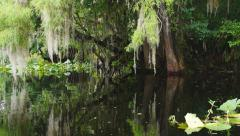 Florida River Swamp Stock Footage