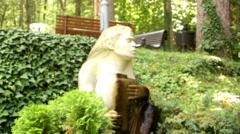 Stone Girl Fountain. Camera Movement. Stock Footage
