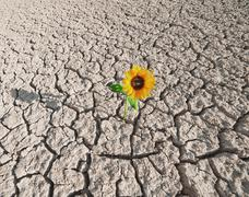 Stock Photo of dry soil and growing plant