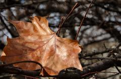The last autumn leaf - stock photo