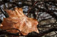 Stock Photo of The last autumn leaf