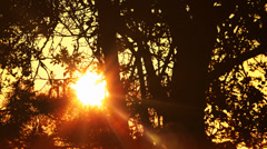 Branches Of Trees With Sun Setting Natural Orange background Stock Footage