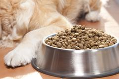Dog with his food Stock Photos