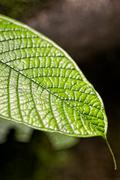 Amazon Plants, National Park Yasuni Stock Photos