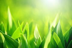 fresh green grass as spring season background - stock photo