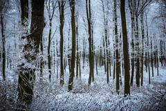 Silent winter forest Stock Photos