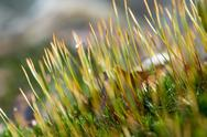 Stock Photo of moss detail