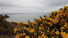 Gorse bushes with sea in background - stock footage
