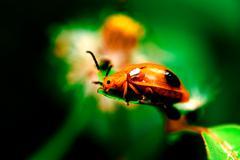beautiful lady bug on grass - stock photo