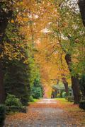 Alley with different trees in autumn colors Stock Photos