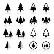 Pine tree vector icons set Stock Illustration