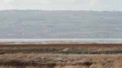 Rspb nature reserve at high tide, river dee estuary, wirral, england Stock Footage