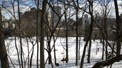 Dogs running in snow covered park through trees Stock Footage