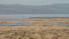 Birds on rspb nature reserve at high tide, river dee estuary, wirral, england Stock Footage