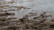 Stock Video Footage of high tide water floods up river dee estuary, wirral, england