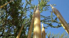 Chihuly in the Garden Exhibition. Desert Botanical Garden. Phoenix Stock Footage