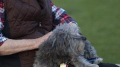 Pan of Elderly Man caressing dog Stock Footage