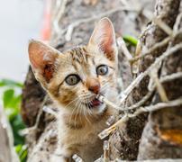 thai cute naughty cat - stock photo